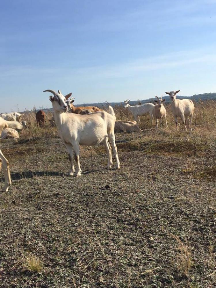 6e540fa8f1faf9 Regulamin Najlepsze sery kozie i wyroby z mleka koziego - Włodowice ...